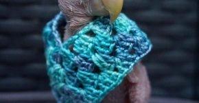 Rhea в голубом пончо