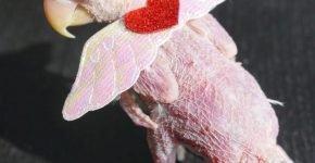 Rhea с запасными крыльями