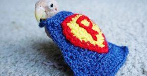 Rhea в костюме супермена