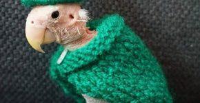 Rhea в зелёном наряде