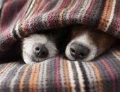 Два собачьих носа