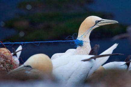 Птица запуталась в нитках