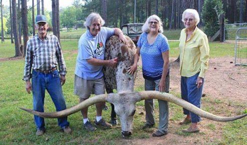 Семья фермеров с быком