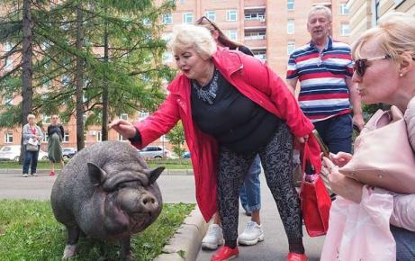 Женщина гладит свинку