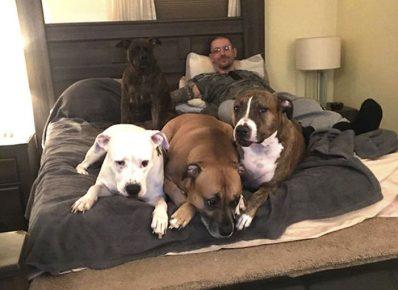 Хозяин с собаками