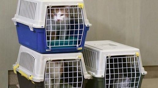 Три кошки в переносках