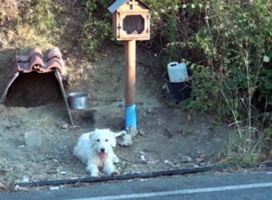 Собака у дороги