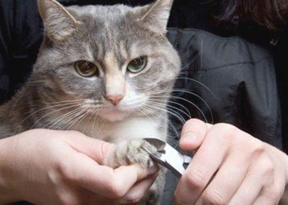 Кошке подрезают когти