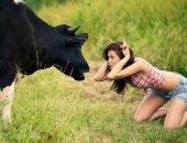 Корова улыбается