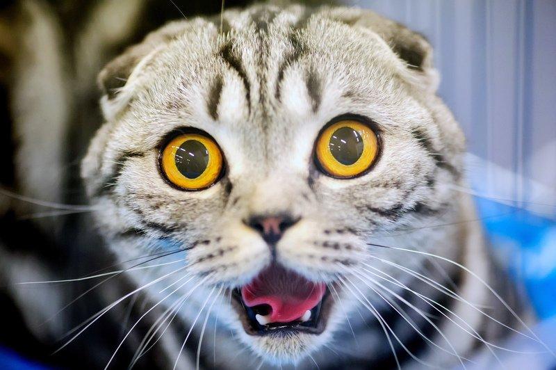 Михаила днем, прикольные картинки с лицами животных