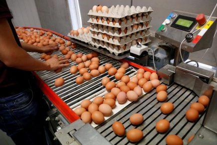Яйца на конвейере