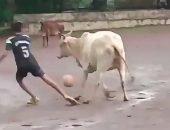 Корова играет в футбол