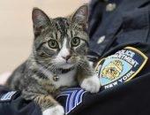 Полицейский кот