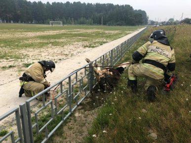 Спасатели освобождают корову