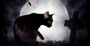 Кот и могила
