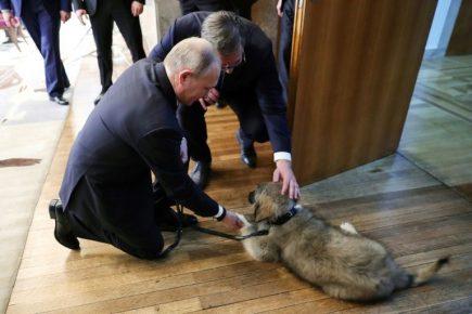Президенты Сербии и России с Пашей