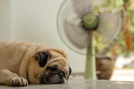 Собаке жарко