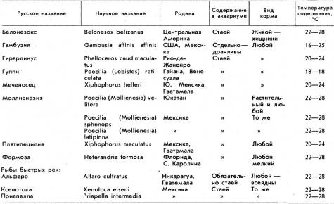 Особенности содержания разных видов аквариумных рыб