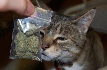 Кот и пакетик марихуаны