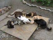Кошки едят