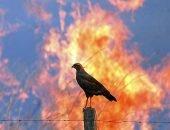 птица и пожар