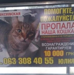 Бигборд о пропавшей кошке
