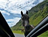 Лошадь на трассе
