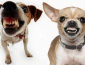 Рычащие собаки