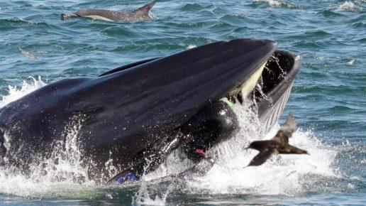 Человек в пасти кита