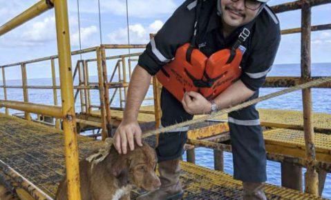 Хон Витисак со спасённой собакой
