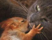 Кошка с бельчонком