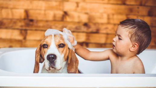 Мальчик купается с собакой