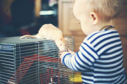 Малыш кормит крысу