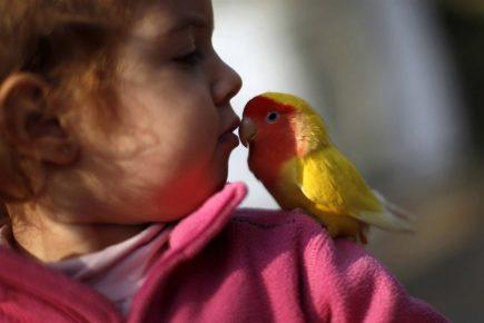 Девочка целует попугайчика