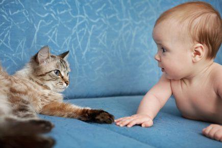 Младенец смотрит на кошку