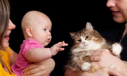 Младенец тянется к кошке
