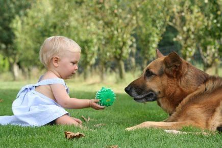 Девочка даёт собаке мячик для игры