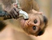 обезьяна и кран