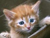 Котёнок в коробке