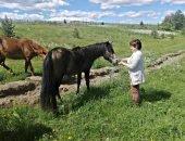 Мезенская лошадь
