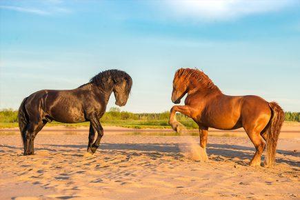 Мезенские лошади