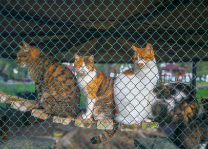 Кошки в клетке