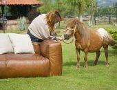 Пони и диван
