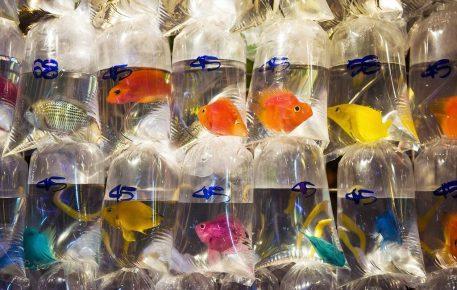 Рыбки в пакетиках