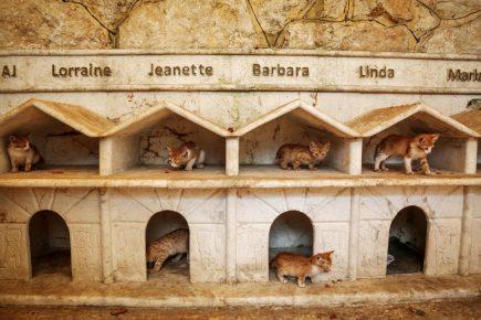 кошачий приют в сирии