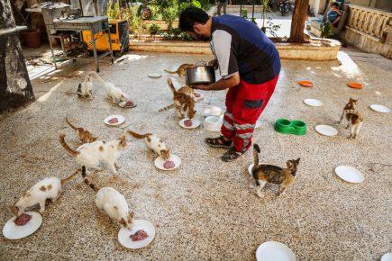 сириец кормит кошек