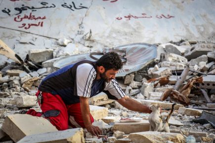 сириец спасает кошек
