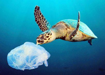 черепаха и пластик