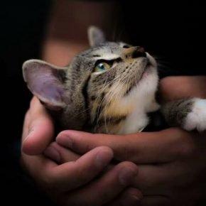 Котёнок в ладонях