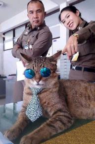 Полицейские и кот